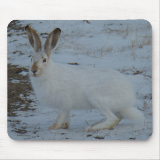 R0023 Snowshoe Hare Mouse Pad