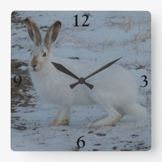 R0023 Snowshoe Hare Square Wall Clock