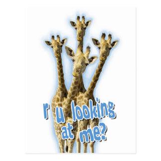 r ulooking at me giraffes postcard