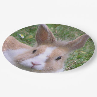 rabbit 9 inch paper plate