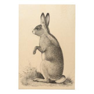 Rabbit Antiquarian Print USPRR Survey 1850s