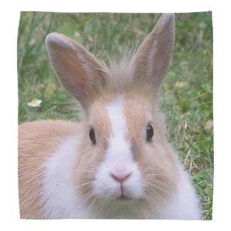 rabbit bandana