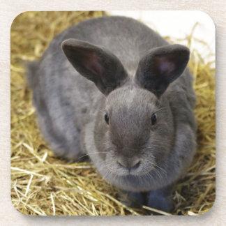 Rabbit Beverage Coaster