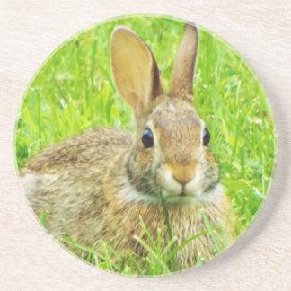 rabbit beverage coasters