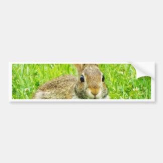 rabbit bumper sticker