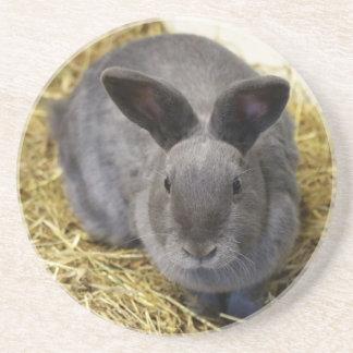 Rabbit Coaster