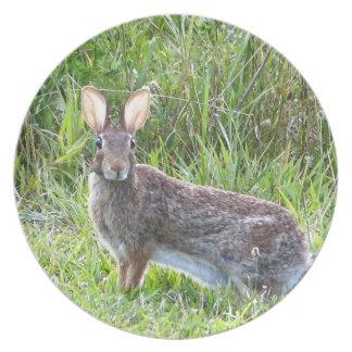 rabbit dinner plate