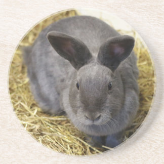 Rabbit Drink Coaster