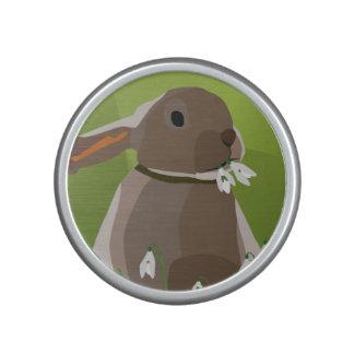 Rabbit eating snowdrops speaker