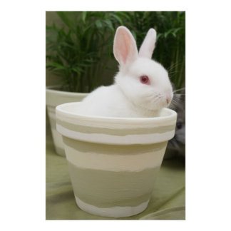 rabbit in a plant pot poster