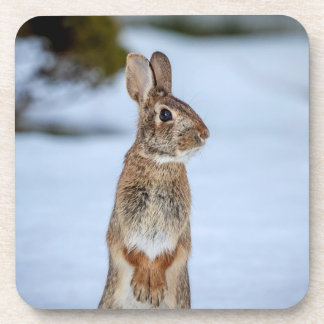 Rabbit in the snow drink coaster