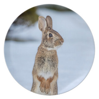Rabbit in the snow plates