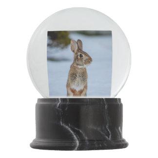 Rabbit in the snow snow globe