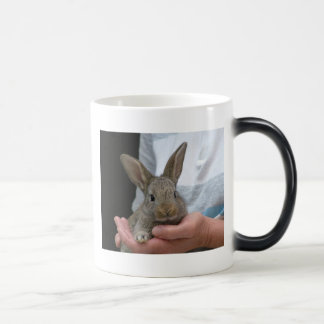 rabbit magic mug
