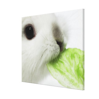 Rabbit nibbling lettuce leaf, close-up canvas print