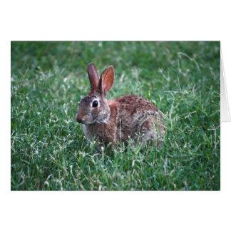 Rabbit Notecard