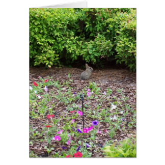 Rabbit on lawn - Vertical Card