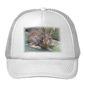Rabbit Pictures Baseball Cap