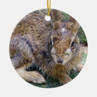 Rabbit Pictures Ornament