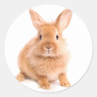 Rabbit Round Sticker