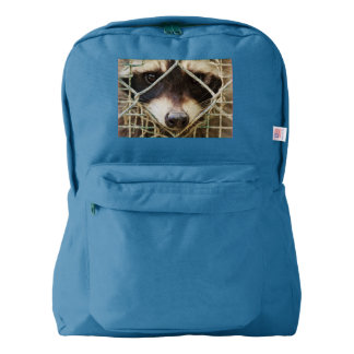 RACCON  ON  BACKPACK