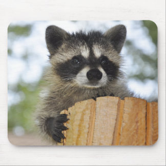 raccoon - #1007 mouse pad