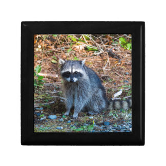 Raccoon at Point Defiance Park WA State Gift Box