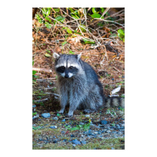 Raccoon at Point Defiance Park WA State Stationery
