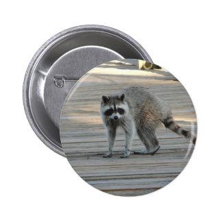 Raccoon Pins
