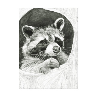Raccoon Drawing Stretched Canvas Print