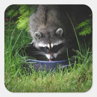 Raccoon Drinking Sticker