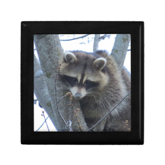 Raccoon Gift Box