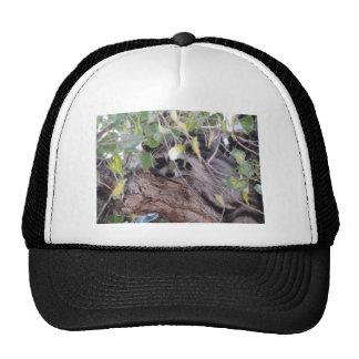 Raccoon Trucker Hats
