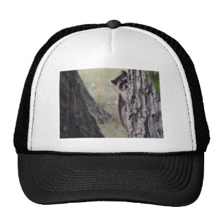 Raccoon Mesh Hat