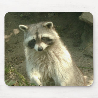 Raccoon I Mouse Pad