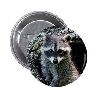 Raccoon in the Den 6 Cm Round Badge