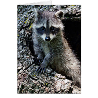 Raccoon in the Den Greeting Card