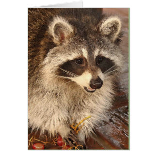 Raccoon Kit with Grapes blank note card