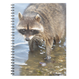 Raccoon Note Book
