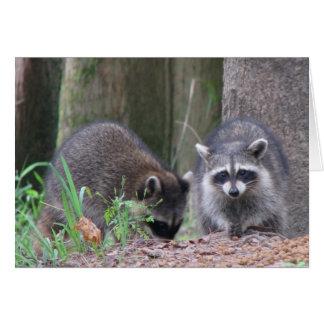 Raccoon Pair Card