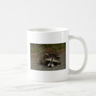Raccoon - Procyon lotor Basic White Mug