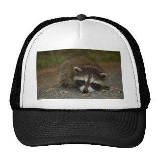 Raccoon - Procyon lotor Cap
