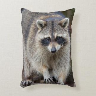 Raccoon, Procyon lotor, Florida, USA 2 Accent Cushion