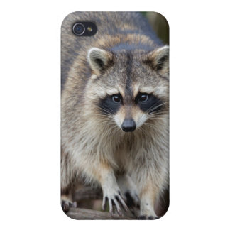 Raccoon, Procyon lotor, Florida, USA 2 Case For The iPhone 4