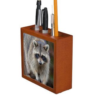 Raccoon, Procyon lotor, Florida, USA 2 Desk Organisers