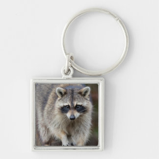 Raccoon, Procyon lotor, Florida, USA 2 Silver-Colored Square Key Ring