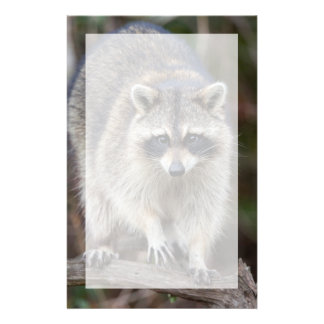 Raccoon, Procyon lotor, Florida, USA 2 Personalized Stationery