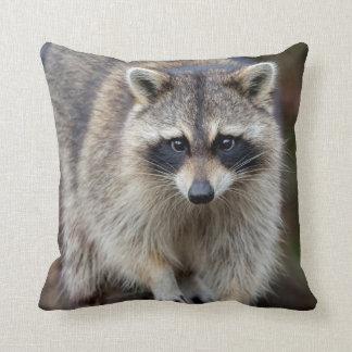 Raccoon, Procyon lotor, Florida, USA 2 Throw Cushion
