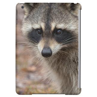 Raccoon, Procyon lotor, Florida, USA 3