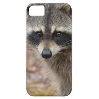 Raccoon, Procyon lotor, Florida, USA 3 iPhone 5 Case